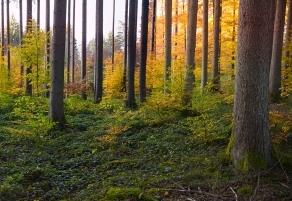 Waldbauliche Förderung wieder vollumfänglich möglich!