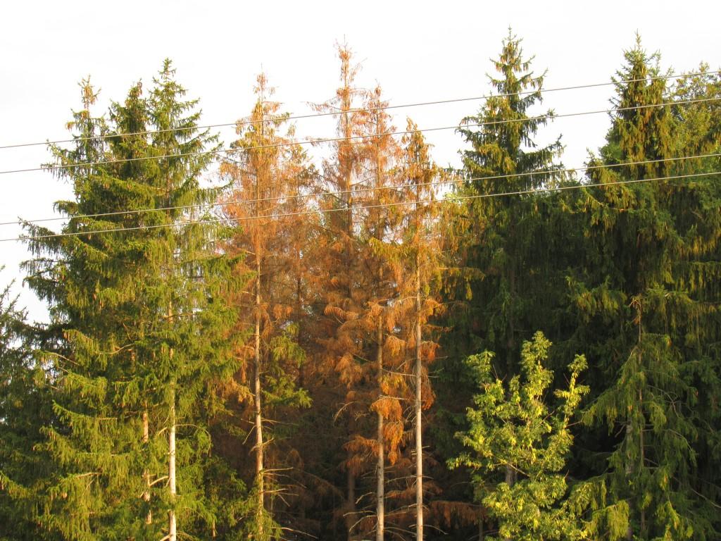 Förderung der insektizidfreien Borkenkäferbekämpfung