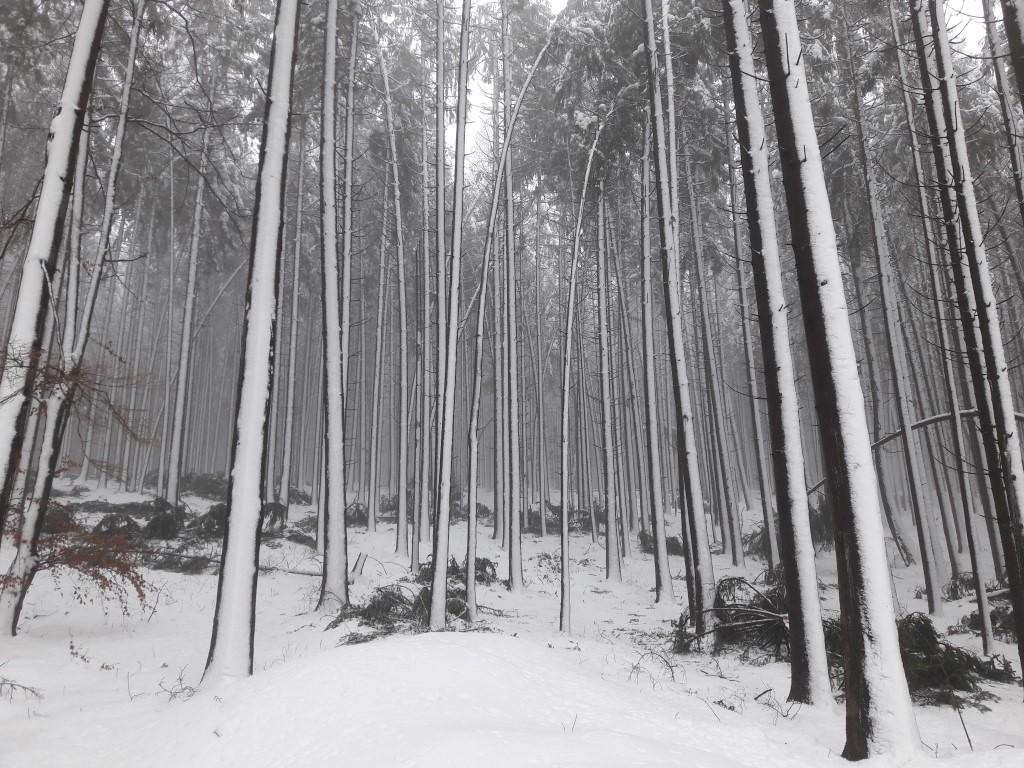 Schneeschäden im Wald - Hilfe für Waldbesitzer