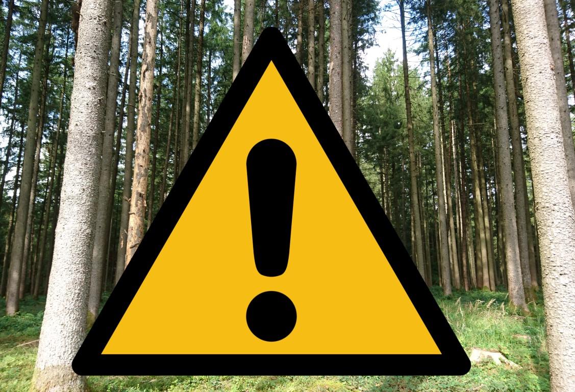 Infektionsschutz bei der Waldarbeit