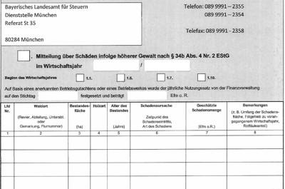 Steuern sparen – Kalamitätsholz melden!