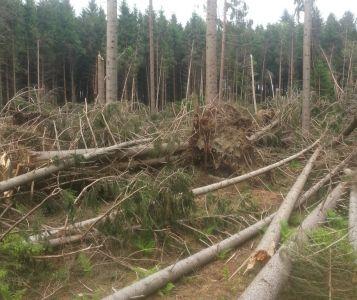 Von Sturm verwüstete Waldfläche; Foto: J. Röder