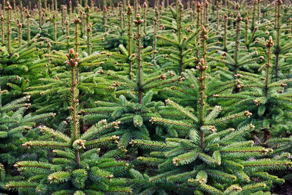 Herbstpflanzung: Vorteile – Nachteile